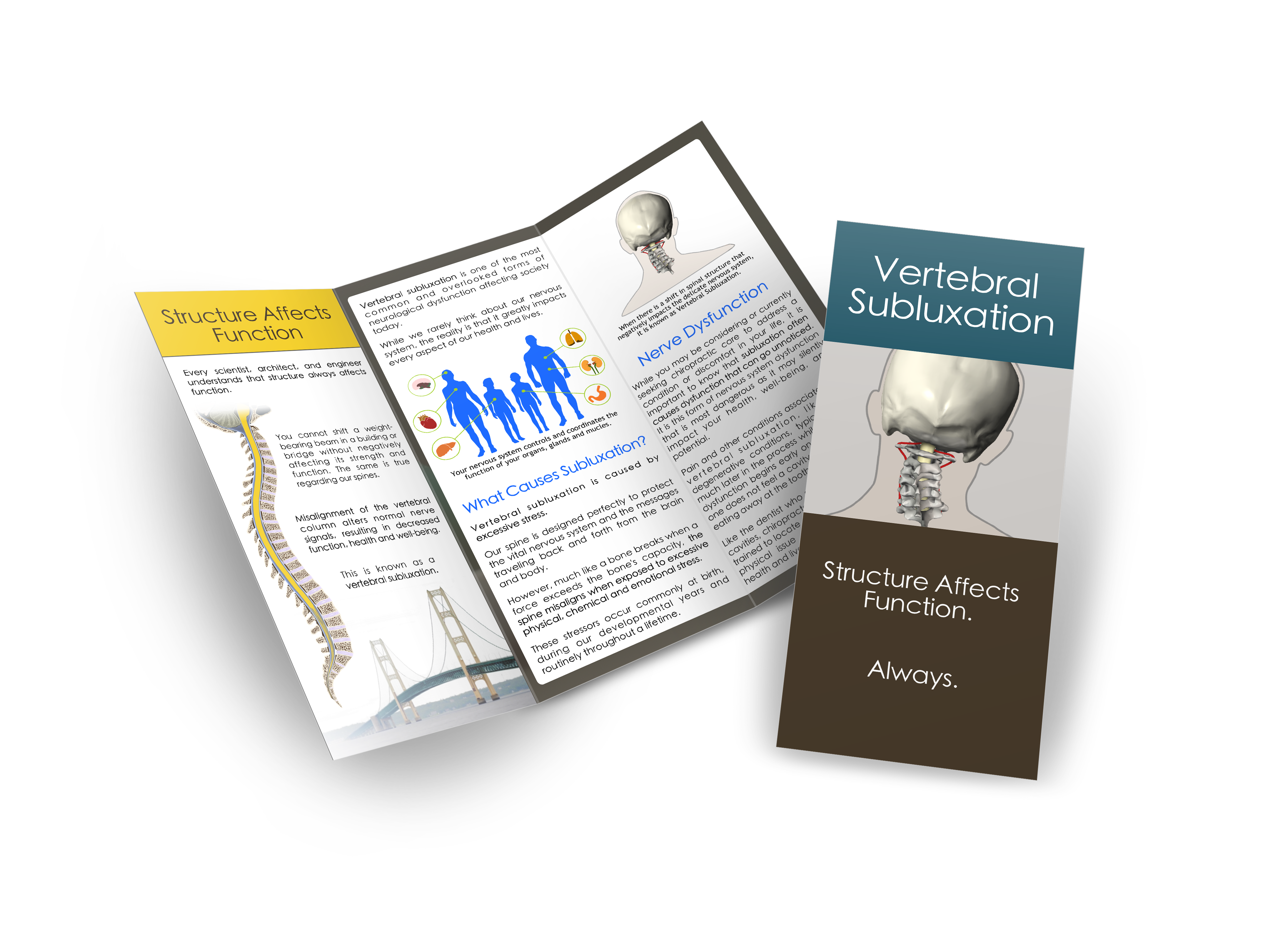 Vertebral Subluxation Brochure
